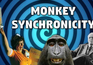 Monkey Synchronicity