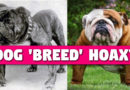 Are Dog 'Breeds' a Hoax?